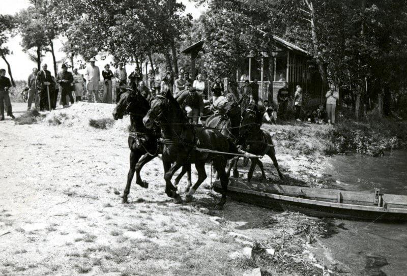 Apajpuszta 1975, avagy a mezőhegyesi lovak víziszonya