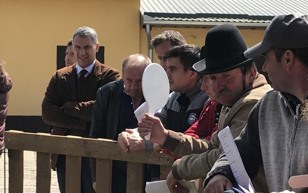 Lázár János és a Nemzeti Ménesbirtok és Tangazdaság menedzsmentje a cigája tenyészkosok árverésén