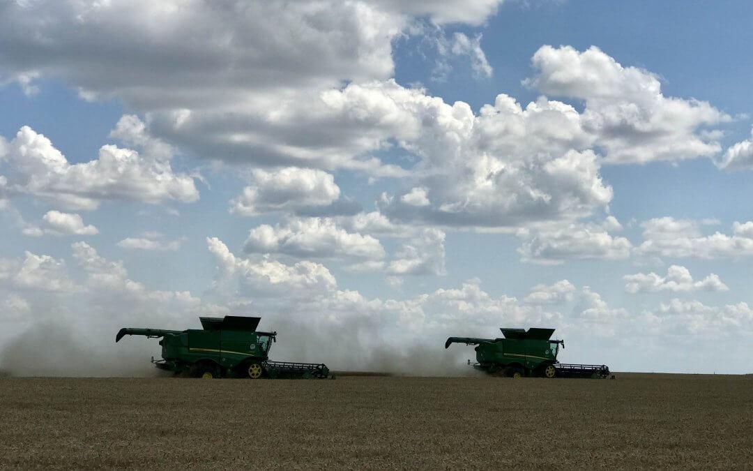 Zajlik az aratás a mintagazdaság földjein