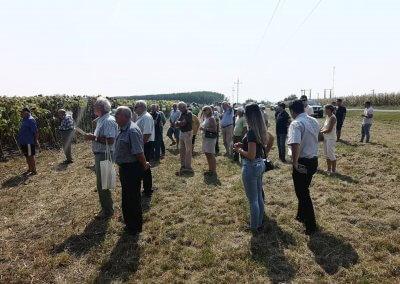 Napraforgó szántóföldi fajtabemutató (6)