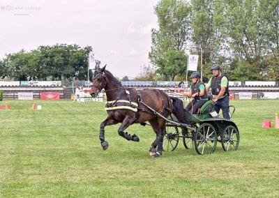 A Világbajnok 6 éves ló, Adele M, (16,26 PONT) pej, szász-türingiai kanca, Németország, Jessica Wachter
