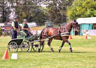 A Világbajnok 7 éves ló, Novana, (16,61 pont) szász-türingiai, pej, kanca, Németország, hajtotta Jessica Wachter