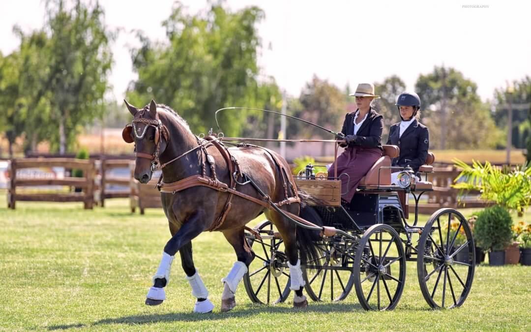 Holland, német, román lovak sikere az első napon