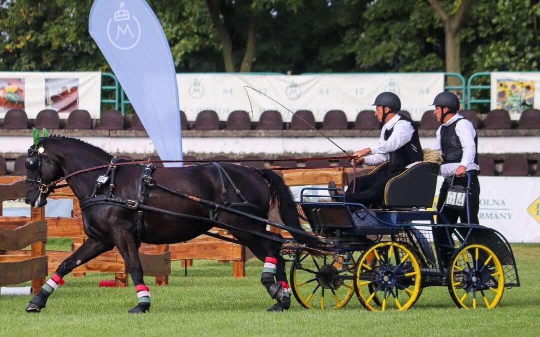 Két német és egy román ló a világbajnok